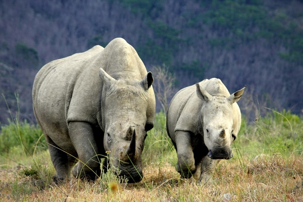 Innovative new technology creates a safe-haven for the rhino